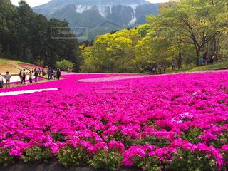 秩父 羊山公園の写真・画像素材[1132469]