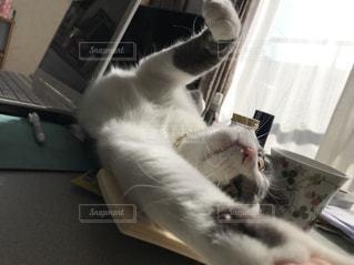 ノート パソコンの上に横になっている猫の写真・画像素材[1530289]