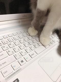 パソコンのキーボード入力する猫の写真・画像素材[1530311]