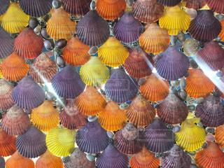 カラフルな貝殻の壁の写真・画像素材[2375953]