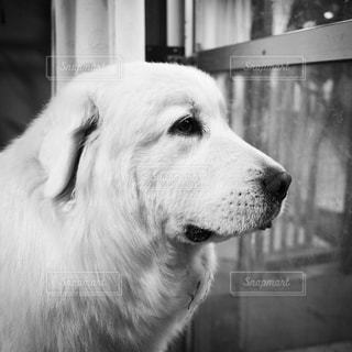 No.265603 犬