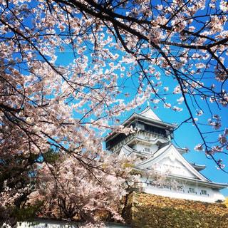 空,桜,屋外,城,小倉城,景観,日中