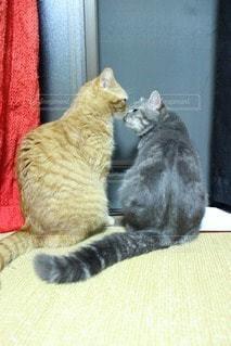 猫の写真・画像素材[36062]