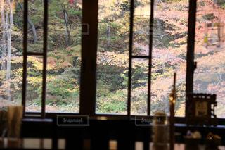 秋,葉,景色