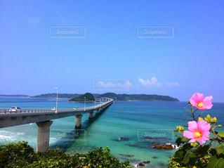 海と空と花との写真・画像素材[1117416]