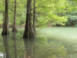 樹影の写真・画像素材[1199675]
