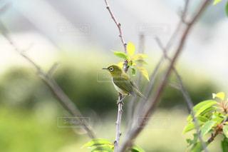 木の枝にとまる小鳥の写真・画像素材[1199784]