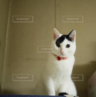 猫,動物,屋内,白,部屋,のんびり,まったり,コンテスト,フォトジェニック,インスタ映え