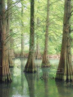 自然,森林,雨,屋外,湖,森,ぼかし,樹木,旅行,梅雨,コンテスト,九大の森,福岡県,フォトジェニック,構図,抽象的,インスタ映え