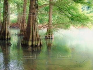 水の体の横にあるツリーの写真・画像素材[1226372]