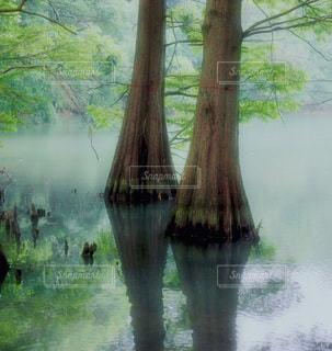 水の体の横にあるツリーの写真・画像素材[1229982]