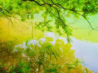 自然,雨,湖,水面,樹木,旅行,梅雨,フォトジェニック,インスタ映え,多色