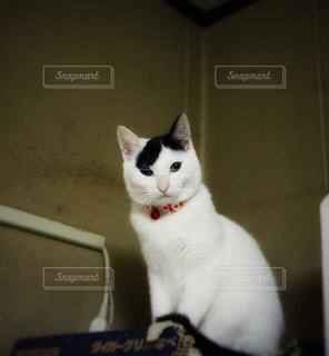白い壁の上に座っている猫 - No.1254774