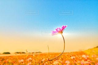 空,花,夕陽,草木,フォトジェニック,インスタ映え,多色