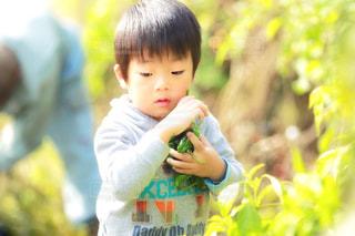 カメラを見て少年の写真・画像素材[1294759]