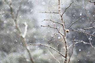雪景色の写真・画像素材[2808605]
