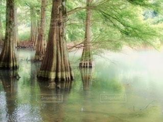 木の隣の水の写真・画像素材[3357020]