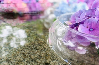花のクローズアップの写真・画像素材[3376044]
