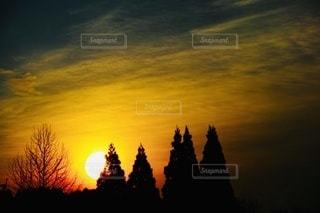 背景に夕日のある木の写真・画像素材[3397304]