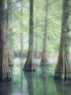 沼杉の写真・画像素材[4407823]