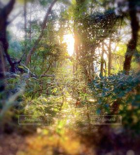 朝日の木漏れ日の写真・画像素材[4415947]