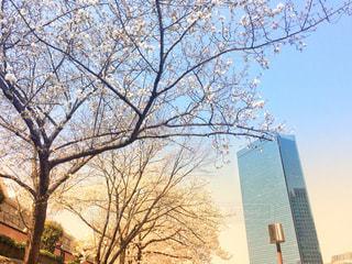 春,桜,ビル,青空,オフィス,大阪城,大阪城公園,さくら,大阪城ホール