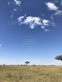 近くに乾いた草のフィールドのの写真・画像素材[1119915]