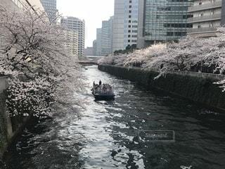 桜,東京都,目黒川,大崎,リバークルーズ