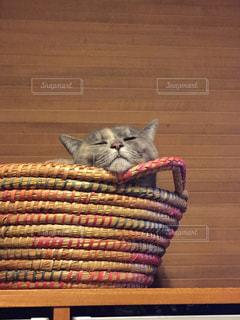 カゴの縁にアゴを乗せて寝る猫の写真・画像素材[1261276]