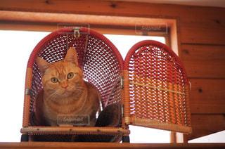 ペットキャリーに入る猫の写真・画像素材[1261287]