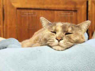 ベッドの上で横になっている猫の写真・画像素材[1261290]