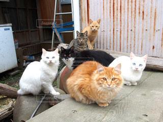 隊列を組んでポーズをとる野良猫たちの写真・画像素材[1261321]