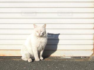 シャッターの前に佇む白猫の写真・画像素材[1261348]