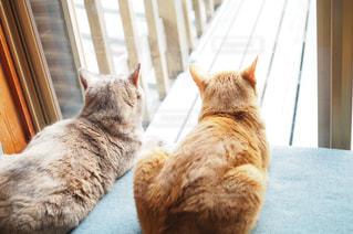 窓辺に座って外を眺める猫2匹の写真・画像素材[1261375]
