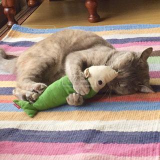 ストライプ柄のラグの上でけりぐるみを抱っこして寝る猫の写真・画像素材[1276353]