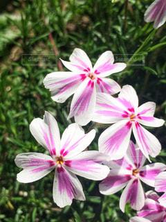 花,春,屋外,ピンク,ハート