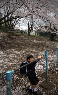 子ども,1人,風景,公園,春,桜,屋外,花見,樹木,人,地面,小学生,入学式,草木,1年生