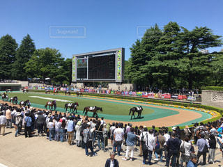 東京競馬場の写真・画像素材[1182046]