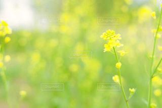 近くの花のアップの写真・画像素材[1150975]