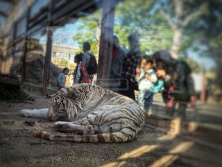 春の動物園にての写真・画像素材[1202422]
