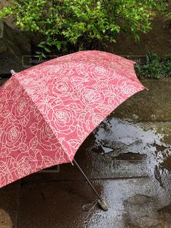 傘,庭,屋外,緑,赤,折りたたみ傘,梅雨,6月,カサ,コンクリ,雨水,梅雨をふき飛ばそう♬,6月6日,薔薇の模様