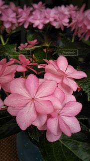 お祝いの花🌸の写真・画像素材[1232329]