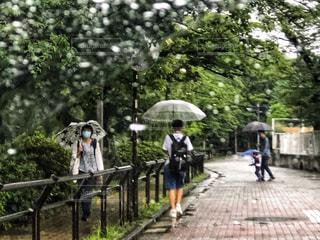 傘,屋外,緑,車道,歩道,車窓,梅雨,雨粒,車窓から,カサ