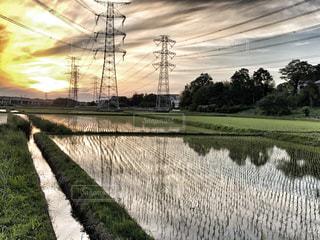 田植えの季節の写真・画像素材[1247548]