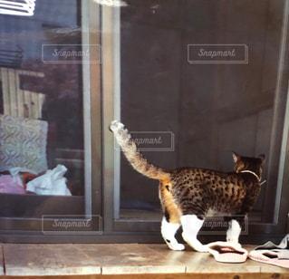建物の前に立っている猫の写真・画像素材[1255205]