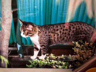 テーブルの上に座って猫の写真・画像素材[1255271]