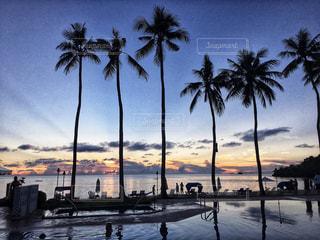 海,夕日,夕焼け,ヤシの木,夕陽,パラオ,ミクロネシア