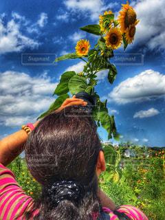 夏の日差しの写真・画像素材[1367801]