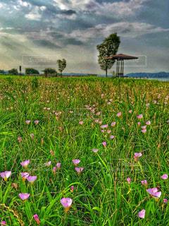 小花の咲く草原での写真・画像素材[1368103]