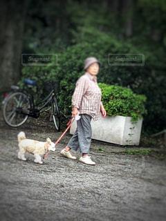 散歩の写真・画像素材[1450446]